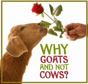 Why Goats and not Cows